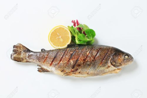 Top 10 best natural foods that prevent osteoporosis for Organic fish food