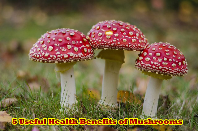 5 Useful Health Benefits of Mushrooms
