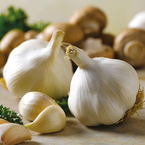 garlicbulbs
